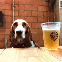 Dining Out with Dogs   Tips for going to dog friendly restaurants