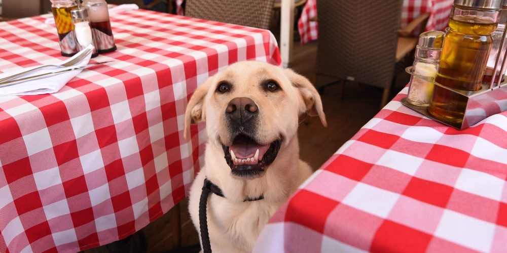 Dog-Friendly Patios create customer loyalty for owners
